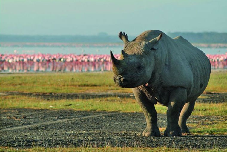 Rhino at Great Rift Lake