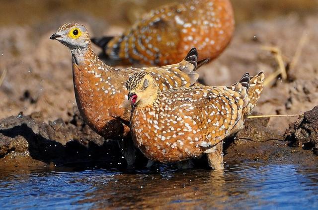 Birdlife  by Ian White