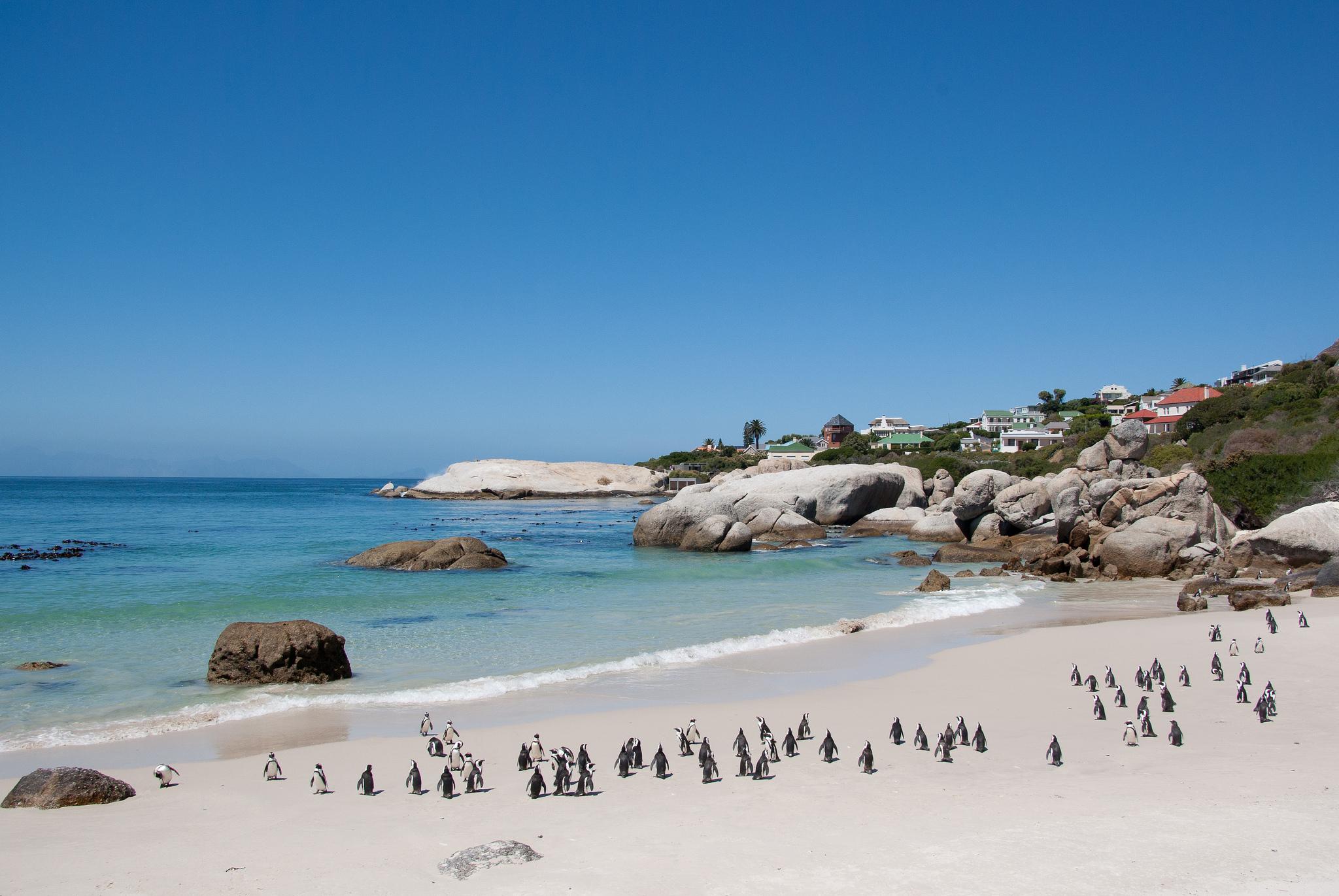 Mpumalanga Province Towns Boulders Beach Cape Town