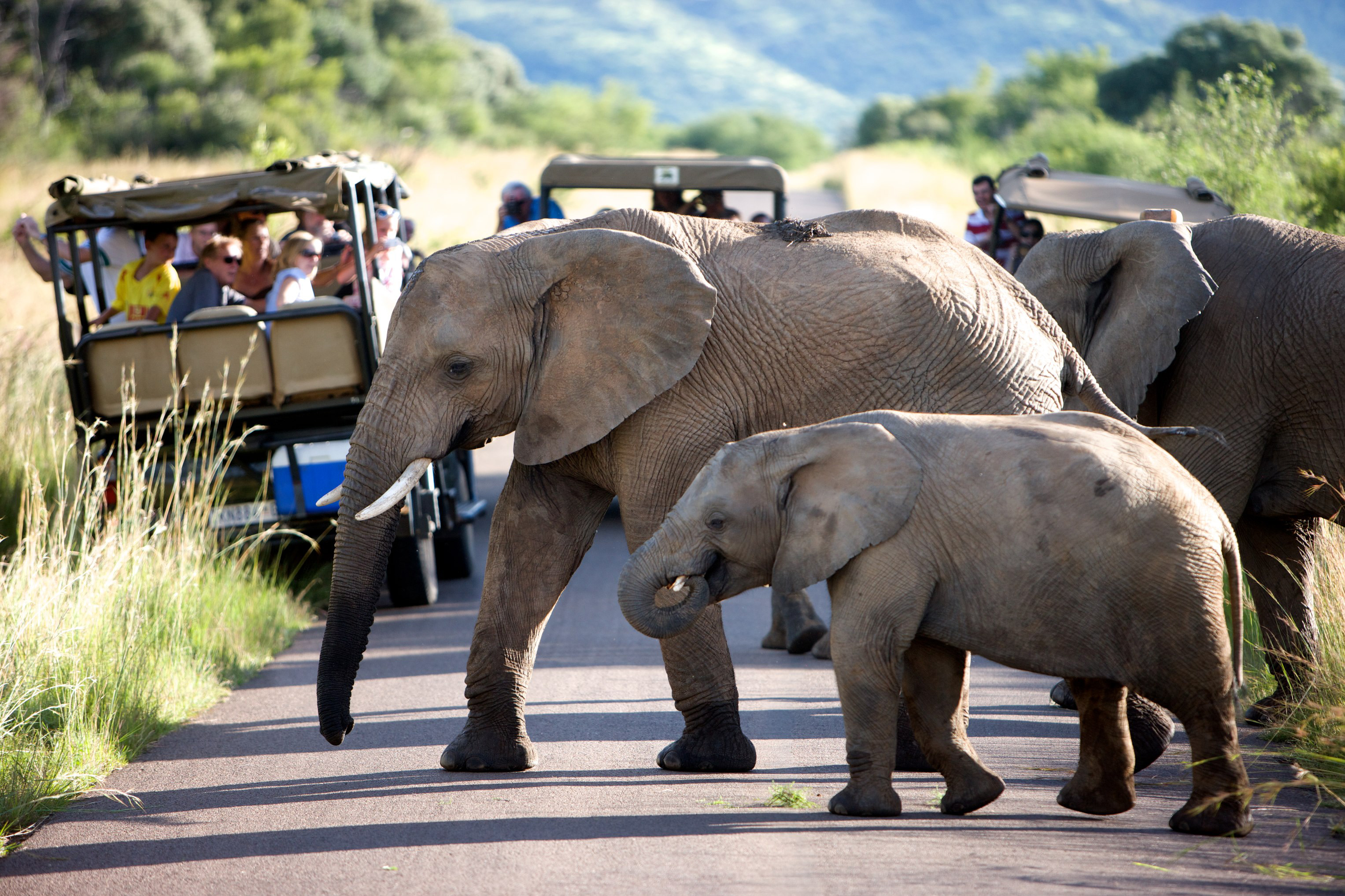 Pilanesberg Safari Tours