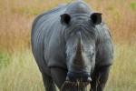 4 Day Kruger Park Bungalow and Sabi Sand Lodge Safari