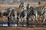 3 Day Kruger Park Bungalow Safari