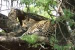 5 Day Kruger Park Bungalow Safari