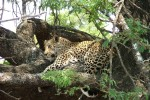 6 Day Kruger Park Bungalow Safari