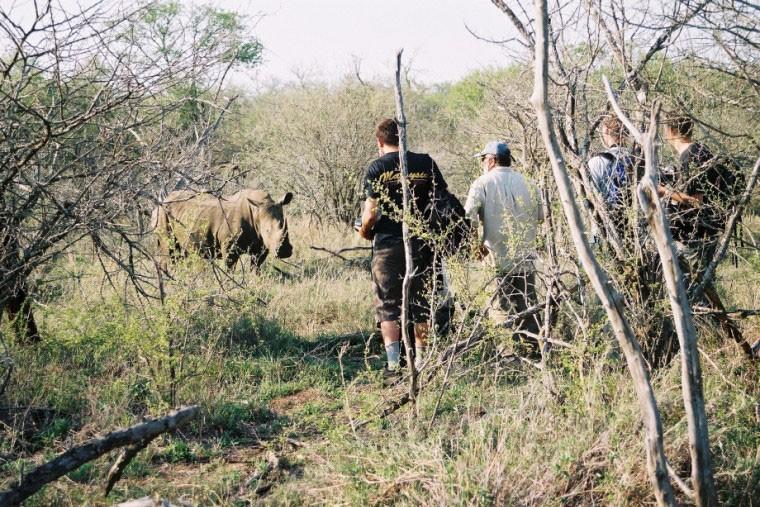 Kruger rhino walk