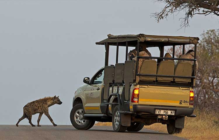 Vehicle and hyena