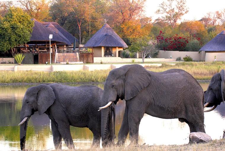 Sabi Sand elephants