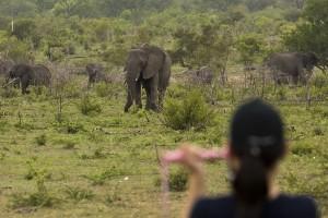 Game walk elephants