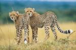 South Africa, Zimbabwe & Vic Falls Budget Safari