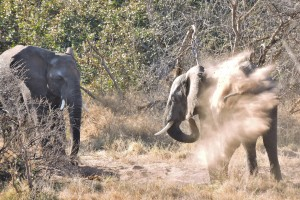 Hwange elephants by Mike