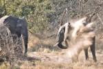 Zimbabwe & Botswana Budget Camping Safari