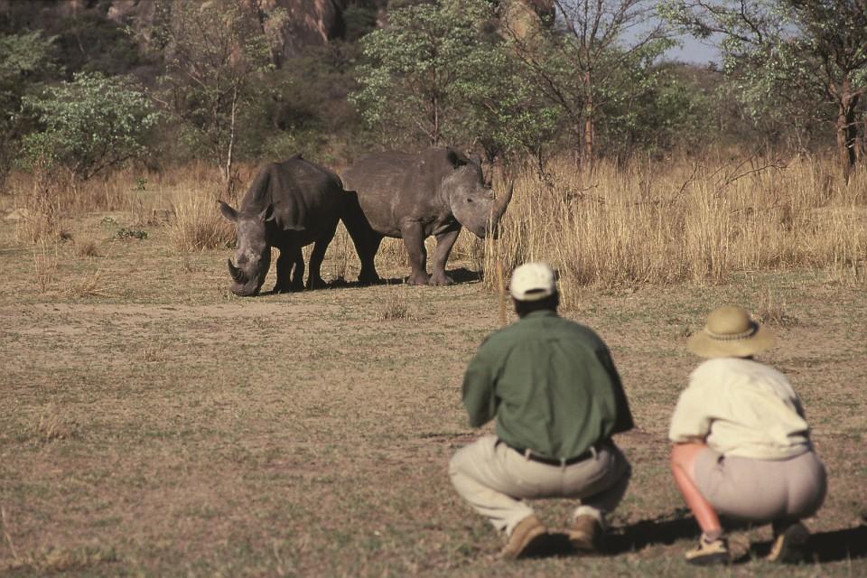 Rhinos in Matobos