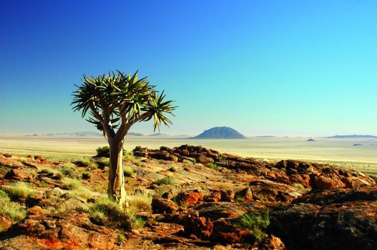 Namib flora