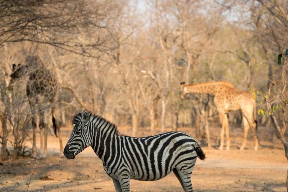 Wildlife sighting