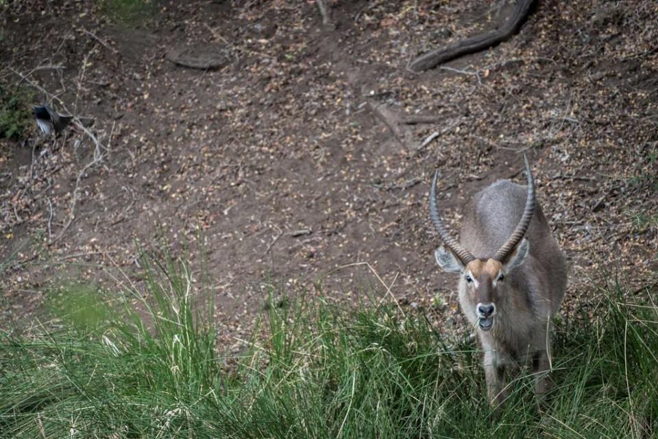 Antelope sighting