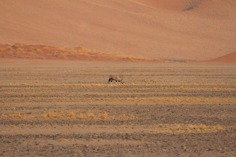 Namib Desert  by Joanne Goldby