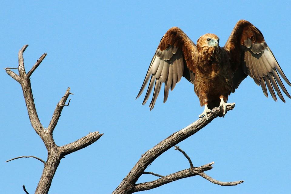 Hwange birdlife  by Marion Bobst
