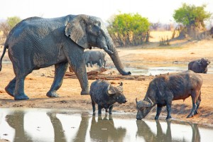 Big Five in Hwange