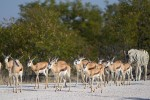 10 day Explore Namibia Lodge Safari