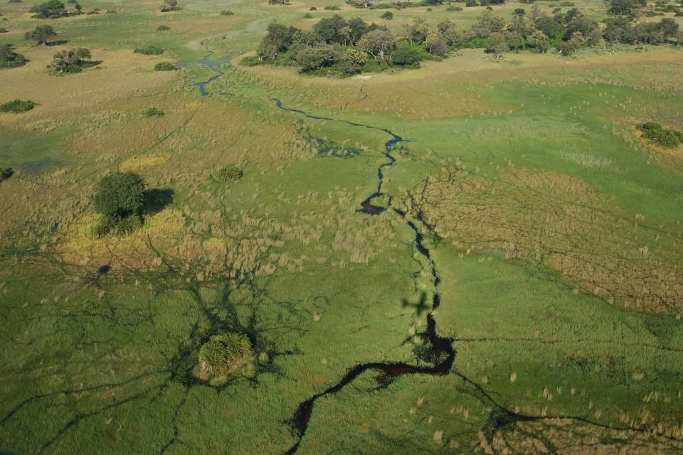 Okavango Delta  by Joachim Huber