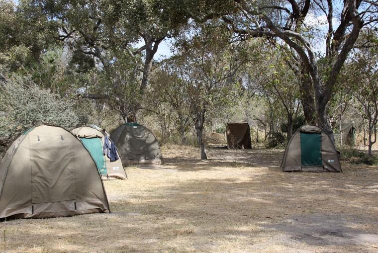 Moremi camp