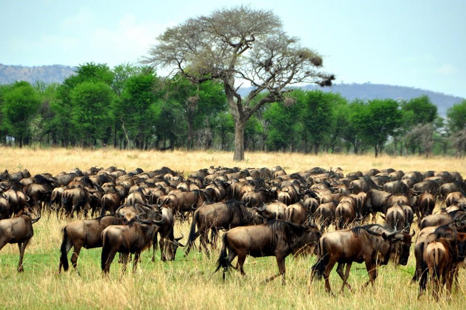 Tanzania-experience animals 07