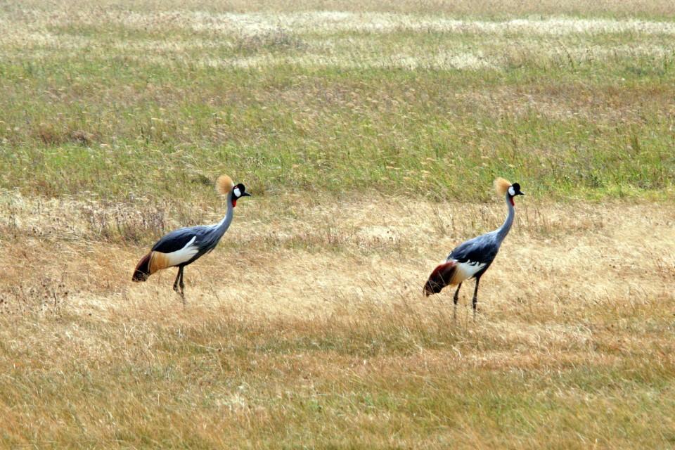Tanzania birdlife
