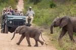 3 Day Kruger Park Lodge Safari to Timbavati