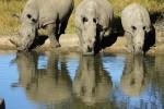 5 Day Kruger Park Lodge Safari