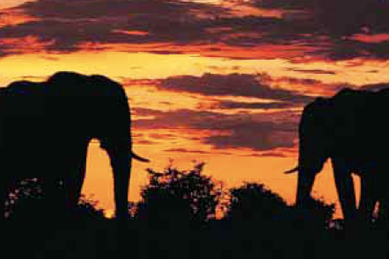Elephants on Safari in Kenya