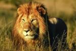 Kruger to Swaziland & Lesotho Overland Camping Safari
