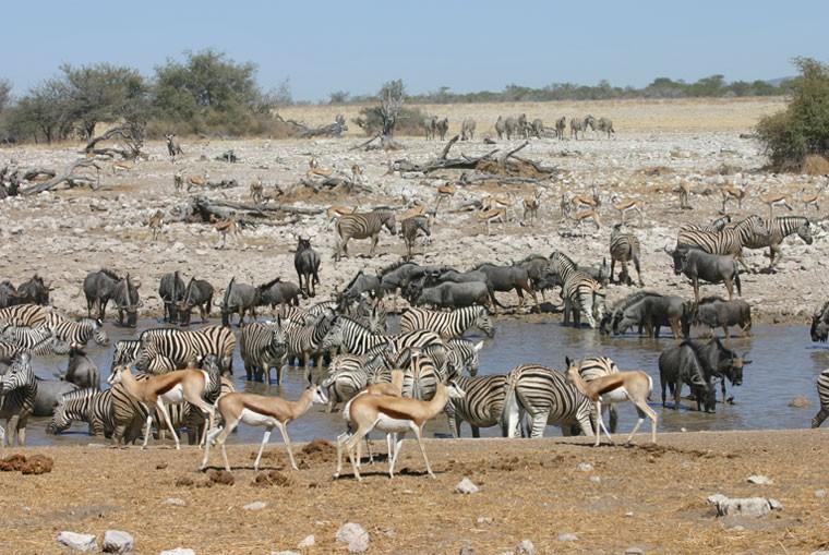 Etosha Water hole Namibia