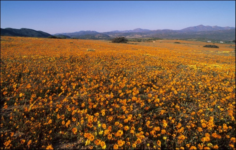 Namaqualand South Africa