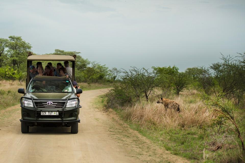 Kruger drive