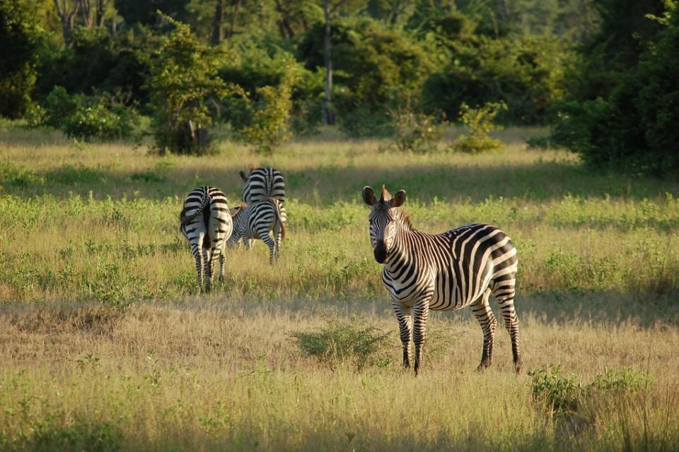 South Luangwa, Zambia  by Joachim Huber