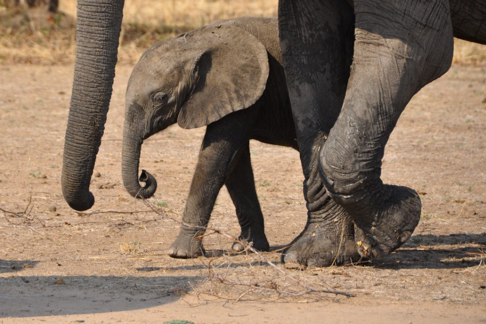 South Luangwa  by Laura Kay