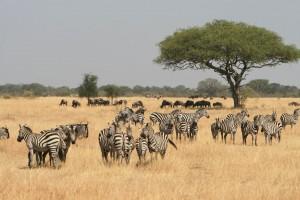 Serengeti game by Marc Veraart