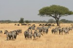 Serengeti game