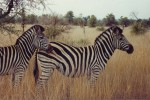 5 Day Kruger & Private Reserves Camping Safari