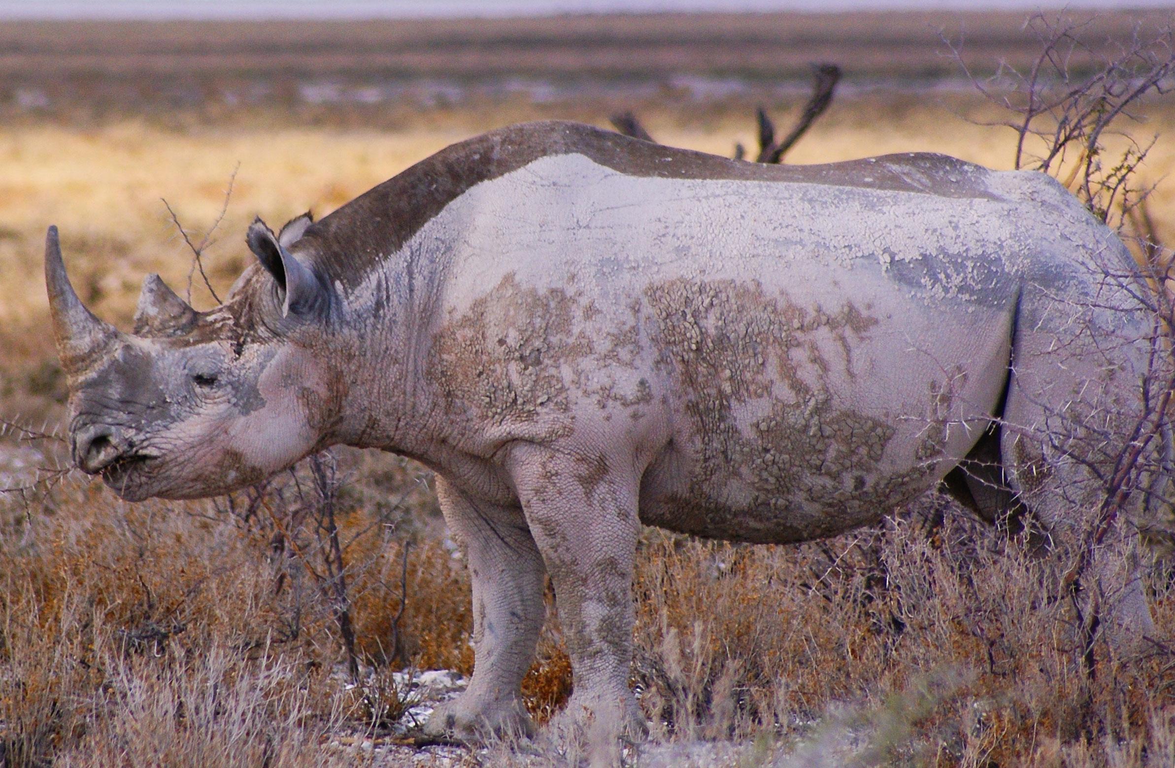 Namibia Safari Adventure - Etosha & Swakopmund Namibia Tour