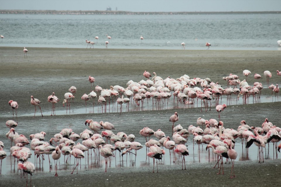 Chameleon safaris - flamingos at walvis bay