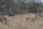 3 Day Kruger Walking Safari to Klaserie Private Reserve