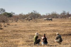 Walking safari in Kruger