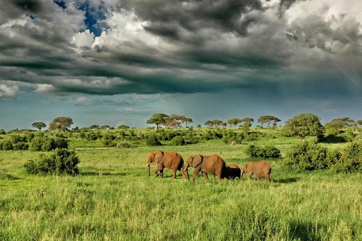Tarangire elephants plains