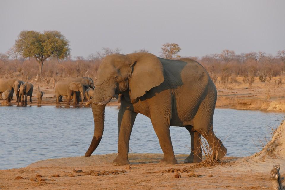 Hwange elephants  by Jean-Marc Dottrens