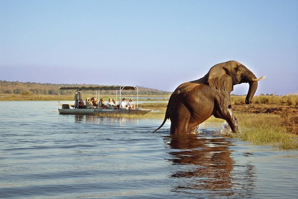 Chobe boat cruise Botswana