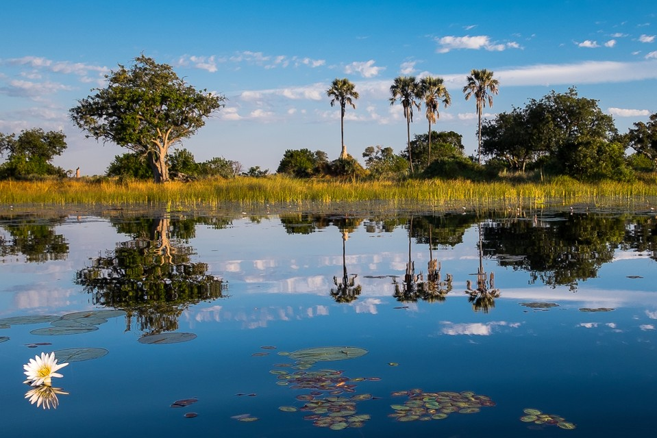 Okavango river.gallery image.6