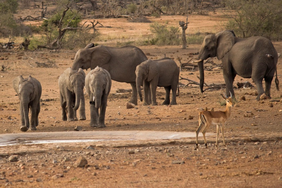 Elephants waterhole