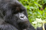 3 Day Gorilla Trekking Adventure in Uganda