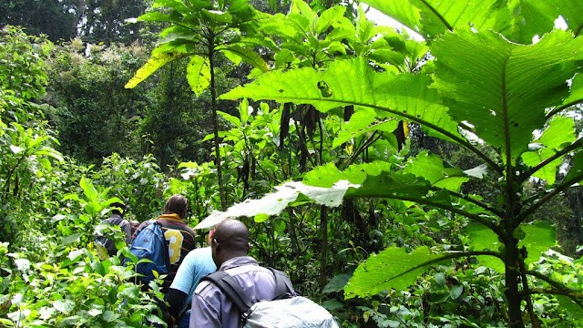 Clients inside the jungle